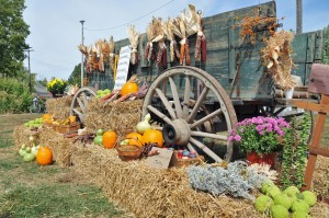 There are many attractions to see and experience at the Pioneer Fair